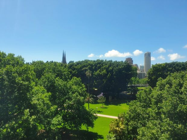 The view of Hyde Park from Ross Cullinane's room