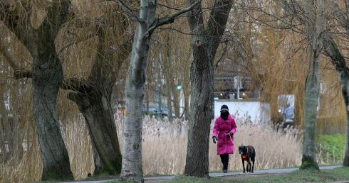 CHILLY STROLL: A woman walking her dog along the Grand Canal in Dublin during Level 5 Covid-19 restrictions. Photograph: Laura Hutton