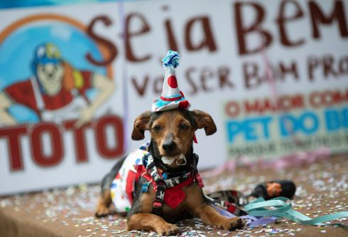 DOG CARNIVAL: Boquino, dressed in a clown costume, sits on stage peppered with confetti during the annual dog Carnival parade in Rio de Janeiro, Brazil on Saturday. Pet lovers from around the city gathered for the tradition that drew participants with their furry, four-legged companions to compete for best costume despite Covid-19 restrictions. Photograph: Silvia Izquierdo/AP