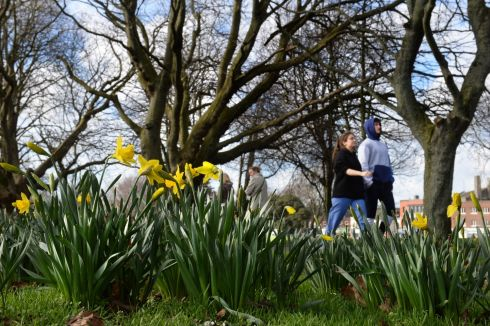 SPRING HAS SPRUNG: Daffodils begin to appear in Fairview Park, Dublin. Photograph: Dara MacDonaill/The Irish Times