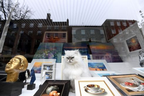 A cat sits in the window of a frame shop in London. Photograph: Facundo Arrizabalaga/EPA