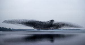 Perfect shot: the murmuration of starlings that James Crombie photographed over Lough Ennell, in Co Westmeath, on Tuesday evening. It became the front-page photograph of The Irish Times of March 4th, 2021. Photograph: James Crombie/Inpho