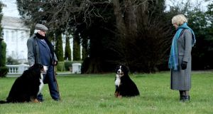 TAKE PAWS: President Michael D Higgins and his wife Sabina go for a stroll in the grounds of Áras an Uachtaráin with Bród and new arrival Misneach. Photograph: Tony Maxwell/Maxwells