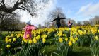 SPRING: Shauna (5) and Lucas (2) with Dad Declan Myers from Lusk exploring a hill of Daffodils at Newbridge House while out for a walk. Photograph: Alan Betson/The Irish Times