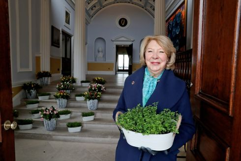 GOING GREEN: In preparation for distanced St Patrick's Day celebrations this year, Sabina Higgins sent bowls of shamrock to a number of prisons in the Dublin area, including Cloverhill, Wheatfield, Mountjoy, the Dóchas Centre and Arbour Hill. In other years, the president's spouse has traditionally marked the festivities by visiting in person. Photograph: Tony Maxwell/Maxwell's