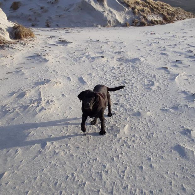 Dash, the Labrador that hunts for ambergris
