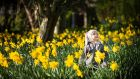 Sophia (1) from Greystones, celebrating  Daffodil Day by the Irish Cancer Society. Photograph: Andres Poveda