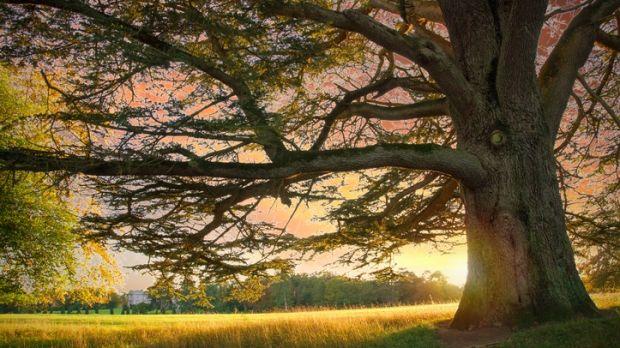 Tree in Emo Court Parklands, County Laois, Ireland.