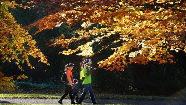 Autumn colours in St. Anne's Park, Clontarf, Dublin. Photograph: Dara Mac Dónaill