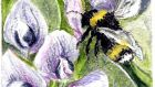 A bumblebee buzzes around in the warmth of the polytunnel, concentrating on a bed of overwintered broad beans.