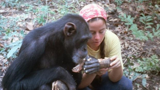 Lucy and Janis Carter in Lucy, the Human Chimp