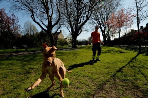 HAVE A BALL: Dan Flynn with his dog Zia at Dublin's Blessington Street Basin Park in the warm weather. Photograph: Alan Betson/The Irish Times