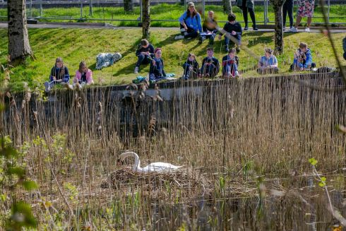 SWAN TAKE: Children from Claddagh National School in Galway take notes on the progress of a swan and its eggs  during a nature walk at Eglington Canal. Photograph: Andy Newman
