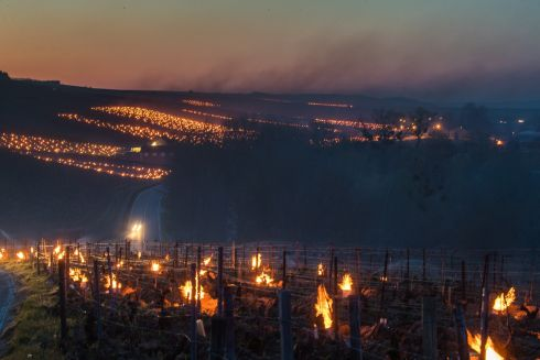 COLD COMFORT: A view of a vineyard as anti-frost candles burn in Chablis, Burgundy, France, amid a frost wave that has devastated prospective crops. Photograph: Christophe Petit Tesson/EPA