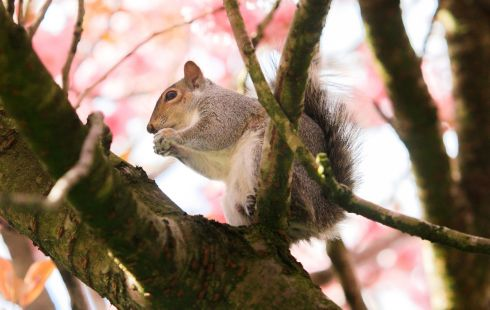 WELL-FED: A squirel eating nuts  in St Stephens Green Dublin. Photograph: Gareth Chaney/Collins