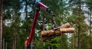 Government figures show it has taken almost a year to issue felling licences needed to help meet the Republic's growing demand for timber. File photograph: Jill Jennings/Forestry Commission/PA