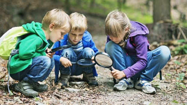 Nature Cubs Ireland teaches children how to identify tracks left by local wildlife such as foxes. Photograph: iStock