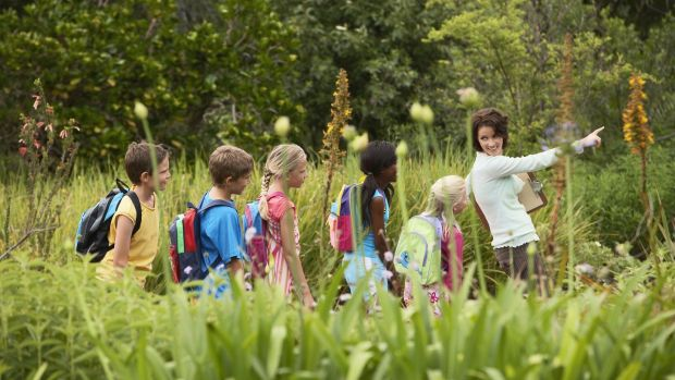 The Junior Pollinator Plan explains what pollination is, why it is important and what schools can do to help. Photograph: iStock