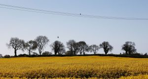 BIRD ON THE WIRE: A bird rests on power cables, in Newcastle, Co Wicklow. Photograph: Nick Bradshaw/The Irish Times