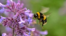 Spend It Better: World Bee Day is less a celebration than an appeal for help