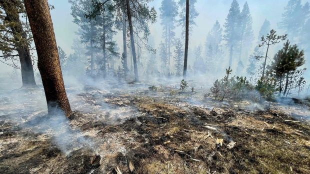 Wildfires in the drought-stricken western United States and Canada continue to burn large areas.  Photograph: US Forest Service / AFP via Getty