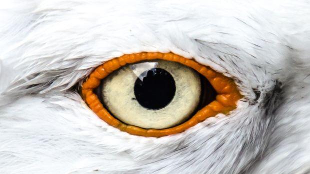 The druid's seagull
