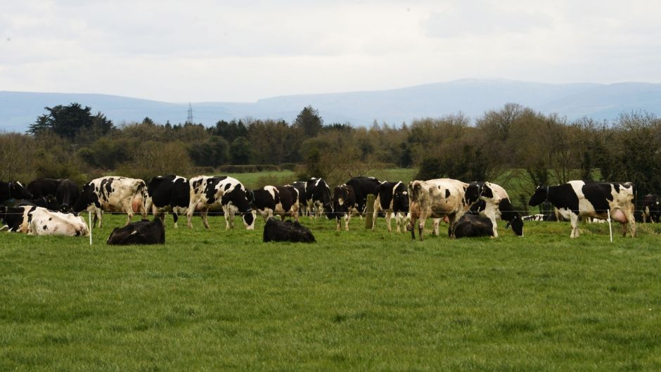 Government greenlights new agri-food strategy despite criticism