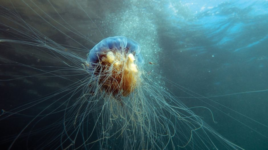Ireland's jellyfish: Before you swim in the sea this summer, check this guide to their stings