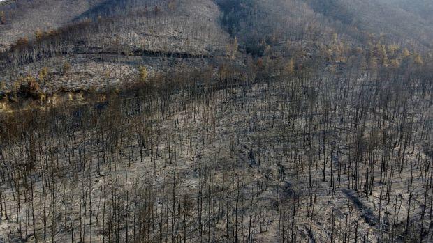 Montagne brûlée après un incendie de forêt dans le village de Papados sur l'île d'Eubée en Grèce.  Photo : Michael Varklass / AB Photo